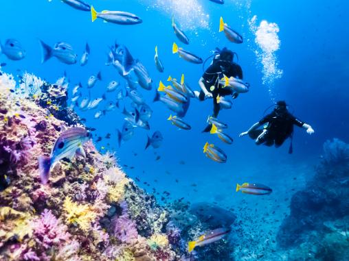 scuba diving at Phi Phi islands